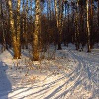 Глядит, хорошо ли метели лесные тропы занесли ... :: Андрей Лукьянов