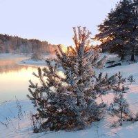 Зимний вечер...........Зимний вечер........ :: Павлова Татьяна Павлова