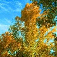 Осень :: Виктор Гузеев