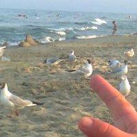 Море...чайки... :: Натали Жоля
