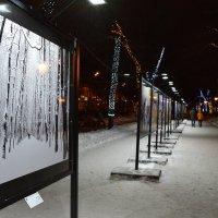Фотовыставка на Тверском бульваре :: Дмитрий Востриков