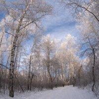 Зима :: Nelli Iudintceva
