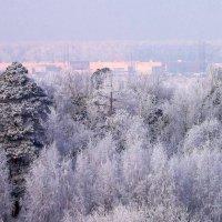 Зимы цветенье. :: ВАЛЕРИЙ