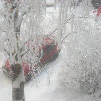 Была снежная зима... :: Елена