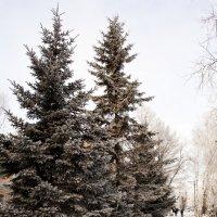 Зима, мороз... :: Вадим Громов
