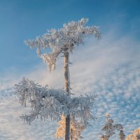 Уральская пальма :: vladimir