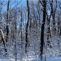 Белым снегом замело... :: Тамара (st.tamara)