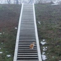 Лестница с котом :: Сергей Волков