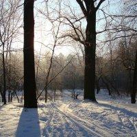 DSC09724 - В Москве морозно, но не холодно :: Андрей Лукьянов