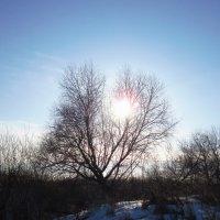 Застряло солнышко в ветвях :: Андрей Снегерёв