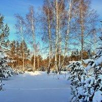 Мороза солнечная звень... :: Лесо-Вед (Баранов)