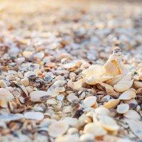 Морские драгоценности :: Алена Бадамшина
