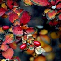 Дело было осенью... :: Наталья Костенко