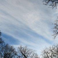 Обнимая небо :: Наталья Джикидзе (Берёзина)