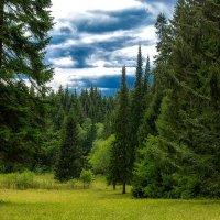 В лесу :: Андрей Качин
