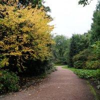 Дорожка в саду :: Natalia Harries