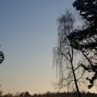 Теплый день :: Юлия Березкова