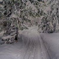 зимняя тропа :: ИриSка &