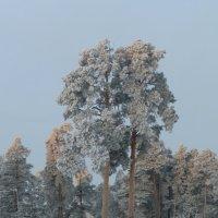 Зимний день. :: Королева Надежда