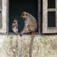 Таиланд. Паттайя. Храм обезьян. Родительские наставления :: Владимир Шибинский