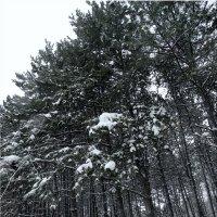 Прогулка по зимнему лесу...3 :: Тамара (st.tamara)