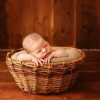 Выездные домашние фотосессии новорожденных крох в Краснодаре и крае 8 918 053 03 53 :: Евгения Гапонова
