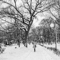 Зимняя аллея :: Владимир Клещёв