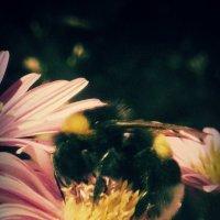 Bee :: Ntalia Grey