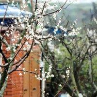 Весна красна :: vcherkun