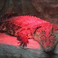 Крокодил :: Екатерина Макарова