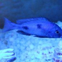 Обитатели аквариума... :: Тамара (st.tamara)