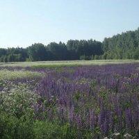 Сирени-рай :: Vladimir Sv