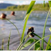 Три пловца... :: Кай-8 (Ярослав) Забелин
