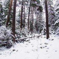 Зимний лес :: Lena Li