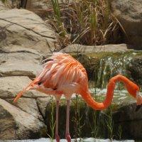 Розовый фламинго :: валерия огородник