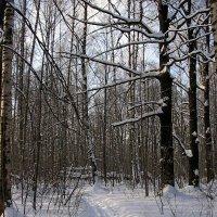 Лыжня :: Владимир Воробьев