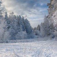 Замороженный лес :: vladimir