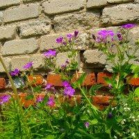 Городские цветы :: Grey Bishop