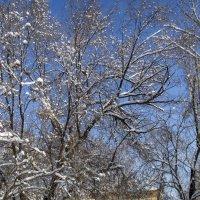 зимние кружева ветвей :: Дмитрий Потапкин