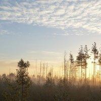 Утро на болоте :: Юрий Цыплятников