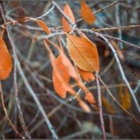 Осень :: Ирина Медведева