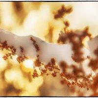 Мороз и солнце :: Леонид