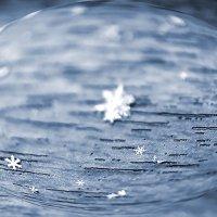Снежинки :: Лариса Корж