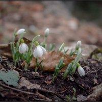 весна? :: Sergey Bagach