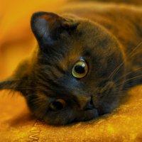 Просто кошка. :: Сергей Колесник