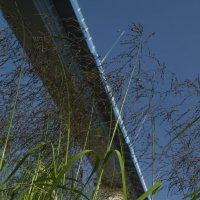 Озеленение моста :: Сергей Шаврин