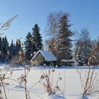 Снежная зима :: Вера Андреева
