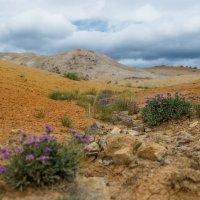 Далеко в горах, где дождей почти не бывает. :: Кирилл Коробов