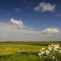 В поле ... :: Константин Филякин