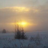 Утро :: Andrad59 -----